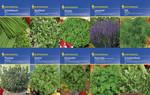Kräuter-Saat-Sortiment mit 10 Sorten | Kräutersamen von Kiepenkerl