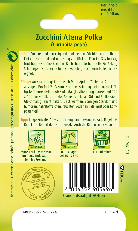 Zucchini Diamant F1 für ca 5 Pflanzen Samen Saatgut Gemüse Schmorgemüse Aussaat