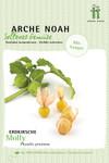 Erdkirsche Molly | Bio-Erdkirschensamen von Arche Noah