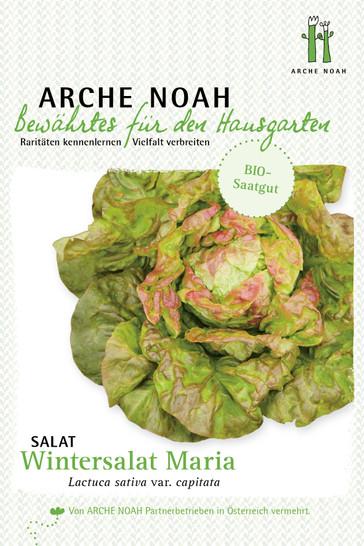Salat Wintermarie | Salatsamen von Arche Noah