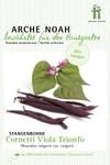 Stangenbohne Cornetti Viola Trionfo | Bio-Stangenbohnesamen von Arche Noah