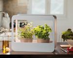 Home Garden mit LED-Beleuchtung | Mini-Garten Zimmergewächshaus von Romberg