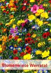 Blumenwiese Werratal 1 kg | Blumenmischung von Küpper