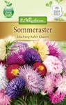 Sommeraster Hohe Mischung | Sommerasternsamen von N.L. Chrestensen