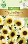 Wucherblume Stern des Orients | Wucherblumensamen von N.L. Chrestensen