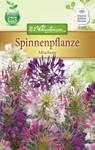 Spinnenpflanze Mischung   Spinnenpflanzensamen von N.L. Chrestensen