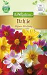 Dahlie Mignon-Mischung | Dahliensamen von N.L. Chrestensen