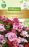 Sommerazalee Mischung | Sommerazaleensamen von N.L. Chrestensen