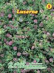 Luzerne | Luzernensamen von N.L. Chrestensen
