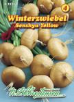 Zwiebel Senshyu Yellow Winterzwiebeln | Zwiebelsamen von N.L. Chrestensen