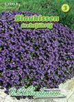 Blaukissen | Blaukissensamen von N.L. Chrestensen