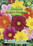 Dahlie Mignon Mischung   Dahliensamen von N.L. Chrestensen