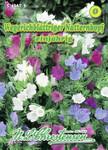 Natternkopf Wegerichblättriger | Natternkopfsamen von N.L. Chrestensen
