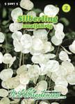Silberling | Silberlingsamen von N.L. Chrestensen