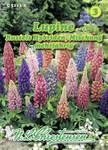 Lupine Russels Hybrid Mischung | Lupinensamen von N.L. Chrestensen