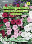 Balkonpetunie Mischung | Balkonpetuniensamen von N.L. Chrestensen