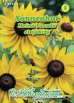 Sonnenhut Meine Freude | Sonnenhutsamen von N.L. Chrestensen