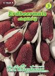 Erdbeermais | Erdbeermaissamen von N.L. Chrestensen