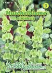 Muschelblume | Muschelblumensamen von N.L. Chrestensen