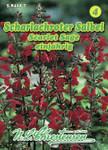 Salbei Scarlet Sage | Salbeisamen von N.L. Chrestensen