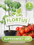 Tomate Supersweet (3 Stück) | Tomatenpflanzen von FLORTUS