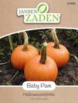 Halloweenkürbis Baby Pam | Halloweenkürbissamen von Jansen Zaden
