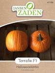 Halloweenkürbis Terrafin F1 | Halloweenkürbissamen von Jansen Zaden