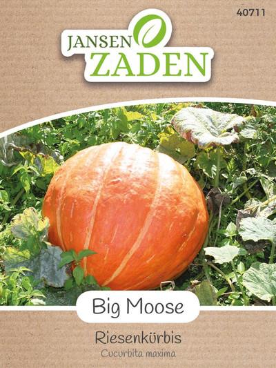 Riesenkürbis Big Moose | Riesenkürbissamen von Jansen Zaden