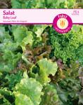 Salat Baby Leaf | Salatsamen von Carl Pabst