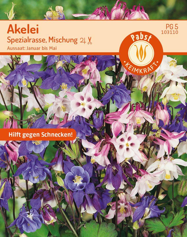 AKELEI Spezialrasse Mischung für 50 Pflanzen Saatgut Sämereien Blumensamen