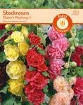Stockrosen Chater's Mischung | Stockrosensamen von Carl Pabst