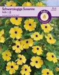 Schwarzäugige Susanne Gelb | Blumensamen von Carl Pabst