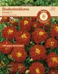 Studentenblume Carmen | Studentenblumensamen von Carl Pabst