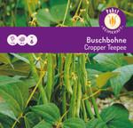 Buschbohne Cropper Teepee   Buschbohnensamen von Carl Pabst