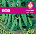 Schalerbse Prins Albert | Schalerbsensamen von Carl Pabst