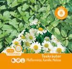 Teekräuter - Kombination - 3 Saatscheiben 8 cm Pfefferminze, Kamille, Melisse | Teekräutersamen von Carl Pabst