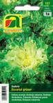 Endivie Escariol grüner | Endiviensamen von Austrosaat