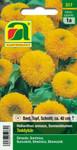 Sonnenblume Teddybär | Sonnenblumensamen von Austrosaat