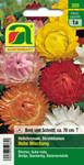 Strohblumen Hohe Mischung | Strohblumensamen von Austrosaat
