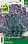 Lavendel   Lavendelsamen von Austrosaat