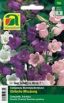 Marienglockenblumen  Einfache Mischung | Marienglockenblumensamen von Austrosaat