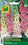 Fingerhut Gloxinienblütige Mischung | Fingerhutsamen von Austrosaat