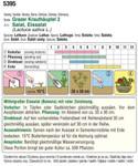 Eissalat Grazer Krauthäuptel 2 | Bio-Eissalatsamen von Austrosaat