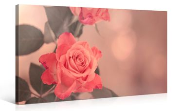 2 roses rétro - 1004138