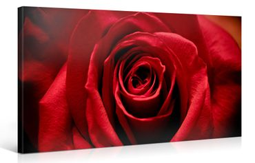 Rose rouge – 1004694
