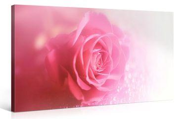 Rose mouillée – 1006202