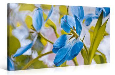 Blaue Blumen – 1006574