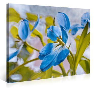 Blaue Blumen – 1006575