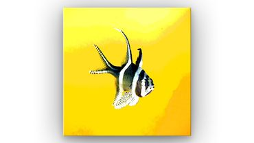 Pop Art poisson - 2020142205