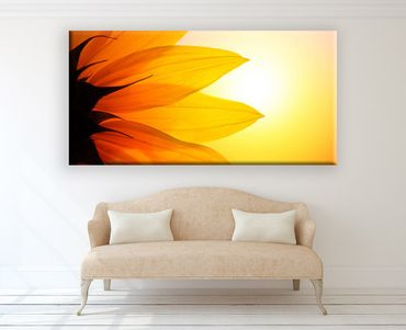 Sonnenblume Nahaufnahme 2 – Bild 2